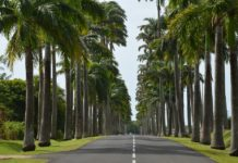 location voiture guadeloupe